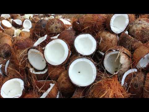 කප්රුක Research Documentary - Coco palm industry in Sri Lanka