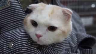 ナイスひょっこり~!キャリーバックから何度も顔を出す猫が可愛すぎる!