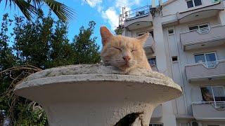Cat sleeping in the flowerpot woke up immediately when she saw the food