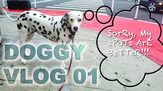 "Dalmatian Dog VLOG 01 "" Funny Spots"""