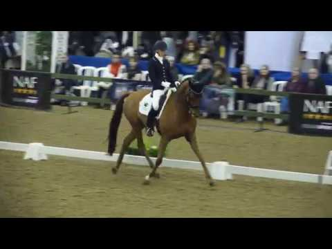 Beautiful Dressage by Laura Wollen Winter Champs 2018