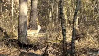 3 hertjes dichtbij de bosrand  (1) op 21-03-2009