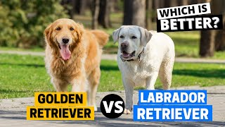 Golden Retriever vs. Labrador: Which Breed Is Right For You?