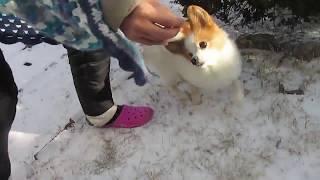 好物のボーロがあれば寒さもなんのそのです。 新之助の動画リスト https...