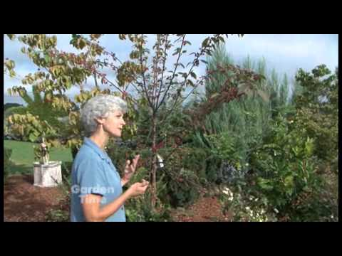 Fall Berry Plants For Birds