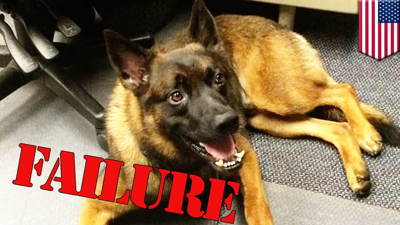Cute police dog fired for being crappy k9 unit unfit for police work