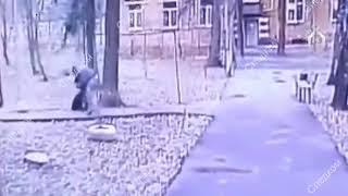 Москвич избил кормившую кошек пенсионерку и попал на видео