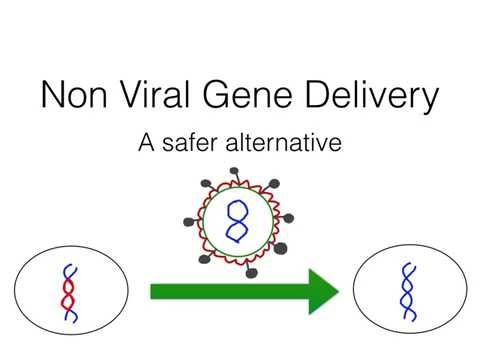 Non--viral gene delivery for the treatment of obesity