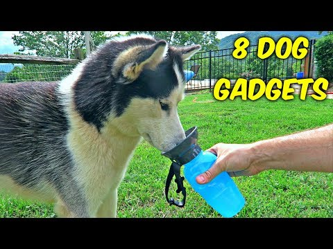 8 Dog Gadgets Put To The Test