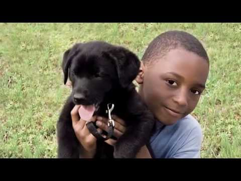 """Canines and Childhood Cancer"" Study by American Humane Association"