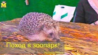 видео контактной зоопарк