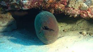 Science O.C.N. -  Deep Water Ocean Lounge - Linear Part 1