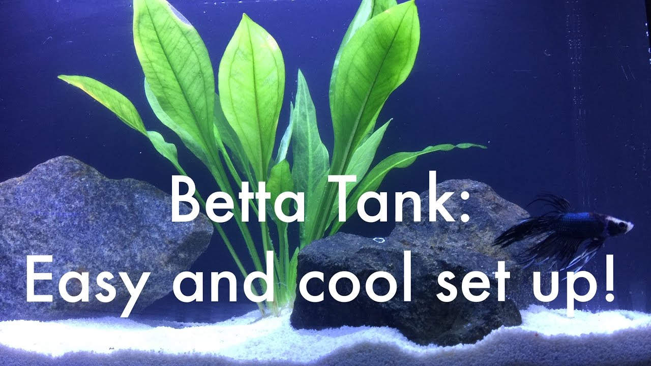 how to set up a betta tank easy quick and cool youtube