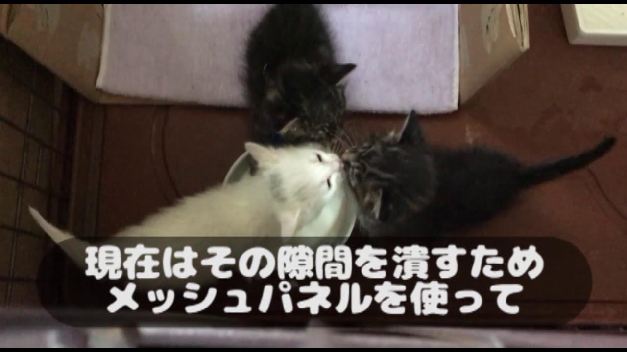 子猫 ミルク いつまで