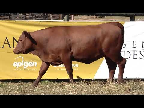 LOTE 57   AFS   0018