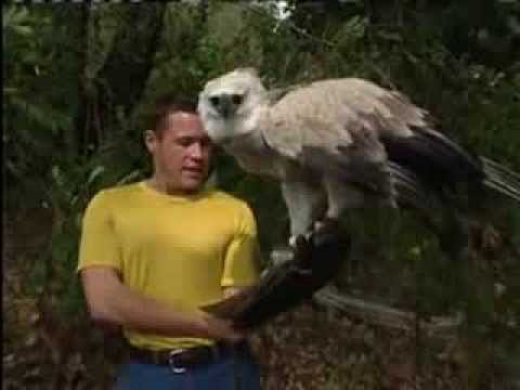 jeff corwin and harpy eagle