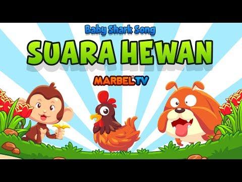 Lagu Anak BABY SHARK - SUARA HEWAN LUCU | Marbel TV Official | KOLAK
