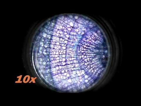 Edu-Science M640X  Microscope | Toys R Us Canada