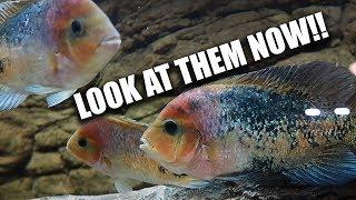 My aquariums - I'M BACK!