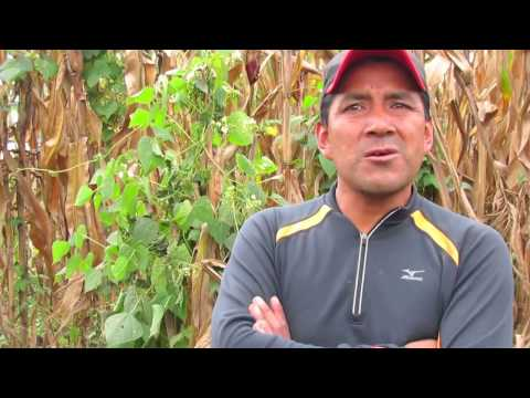 Chico Mendes Reforestation Project interview with Armando with English Subtitles