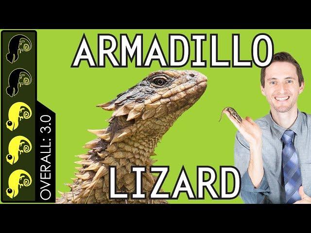 Armadillo Lizard, The Best Pet Lizard? - YouTube