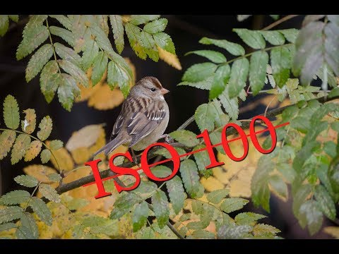 Nature Photography: ISO 100 vs 400