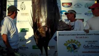 CatchStat | 2012 Bisbee's Los Cabos Offshore Tournament Fish #14328