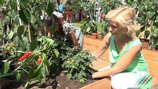 Бакинские помидоры назвали «высшим пилотажем» в Ботаническом саду МГУ