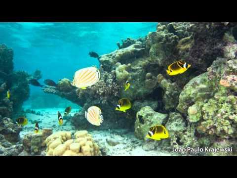 Butterflyfish Behavior