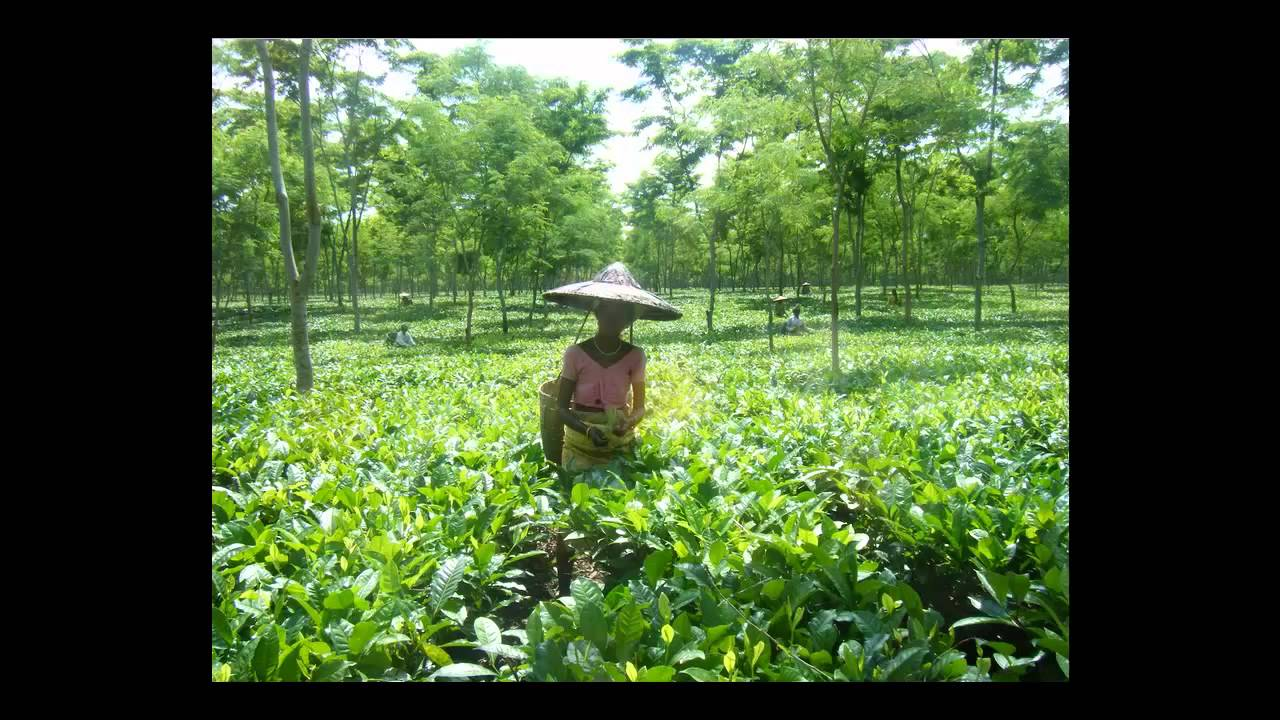 Agriculture I Types of Agriculture - YouTube