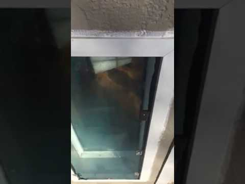 with weather for hale dual door is and flaps dog window info pane windows double tight glass pet