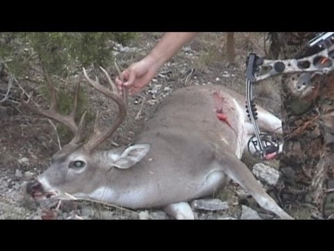 10 Point Buck Bow Archery Hunt From Ground Blind In South