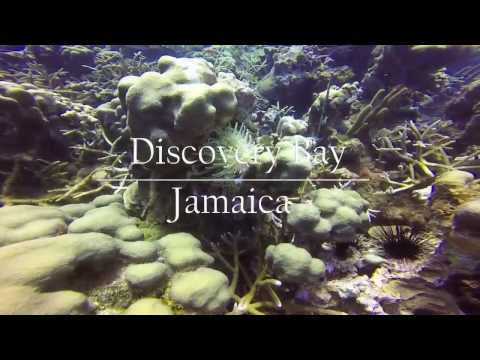 Diving in Discovery Bay, Jamaica