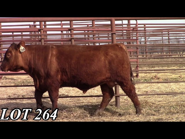 Mead Angus Farms Lot 264
