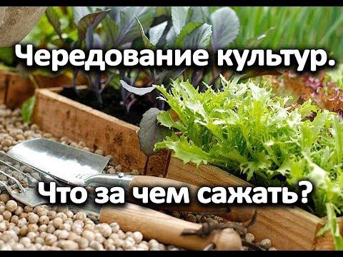 Огород по уму! Чередование культур. Уникальная таблица. Что за чем сажать? | чередовать | севооборот | растения | таблица | огороде | даче | как | на | в