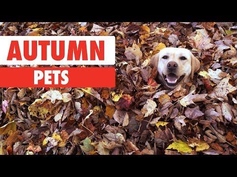 Autumn Pets