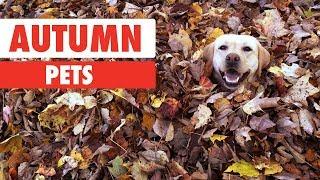 autumn-pets