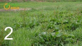 Grass into Gold odc. 2 - Jak poprawnie dokonać renowacji łąki lub pastwiska.