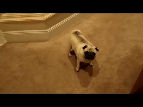 Faze Rug Gets Rejected By Bosley You