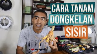 Video Cara Menanam Bahan Bonsai Sisir Dongkelan Alam download MP3, 3GP, MP4, WEBM, AVI, FLV Juni 2018