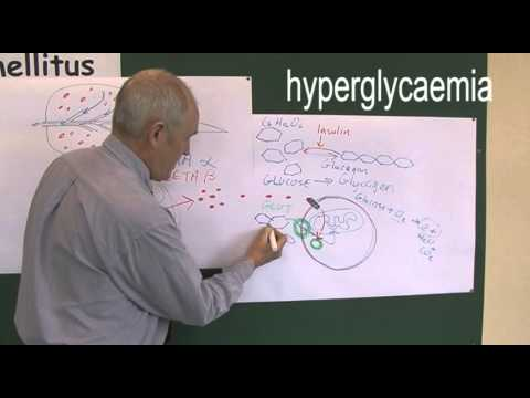 Diabetes 4, Type one and type two pathophysiology