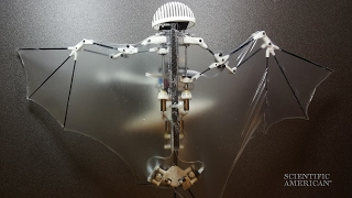 Robo-Bat Flaps Like the Real Thing