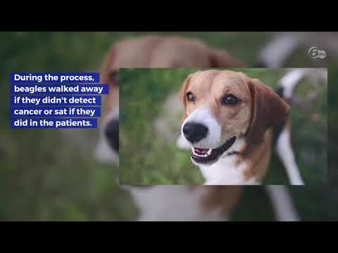 Dogs can detect lung cancer with 97% accuracy