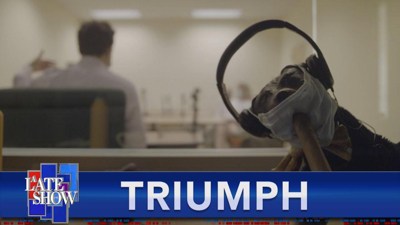 Download Late Show Correspondent Triumph The Insult Comic Dog Hosts A Focus Group With Real Trump Supporte…