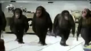 Чеченцы даже обезьянов заставили лезгинку танцевать