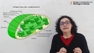 Biología Celular: Cloroplastos (15/05/19)