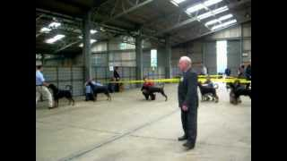National Working & Pastoral Breeds Ch Show 2012 Dobermann Dog Challenge