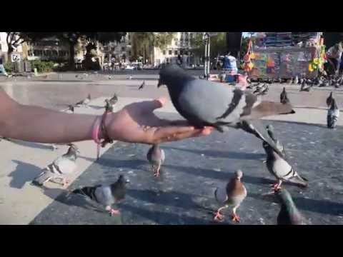 "Hand Feeding the Pigeons at Plaça de Catalunya Square ""Catalonia Square"", Barcelona 15/06/2016"