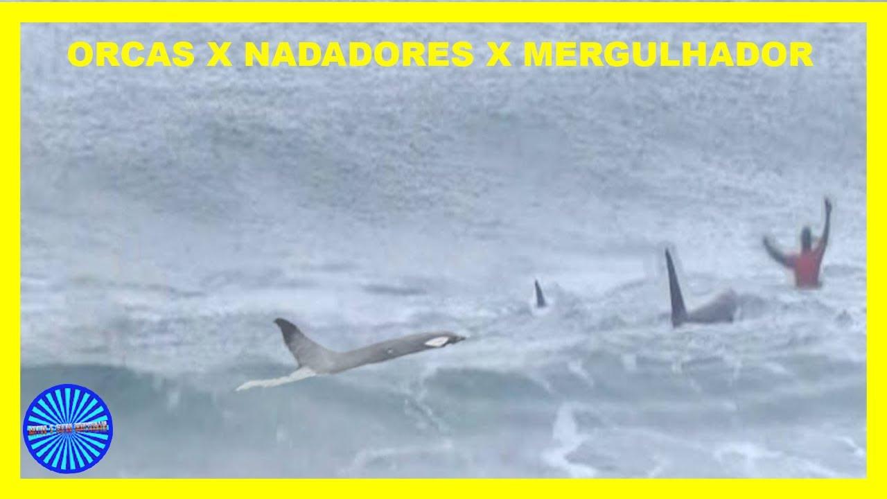 BANHISTAS E NADADOR ESCAPANDO DE ORCAS - BALEIAS ASSASSINAS