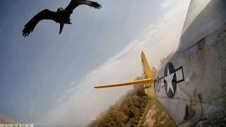 Hawk Attacks, Crashes RC Planes
